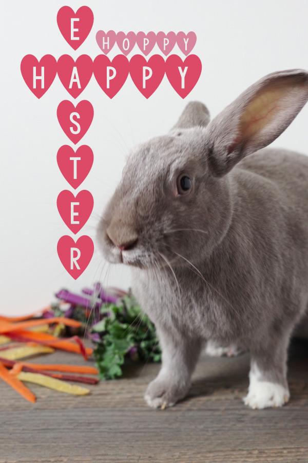 bunny-says-hello.jpg