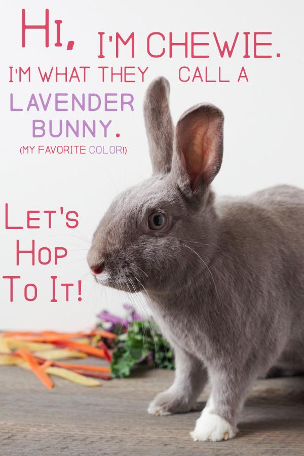 bunny-welcome