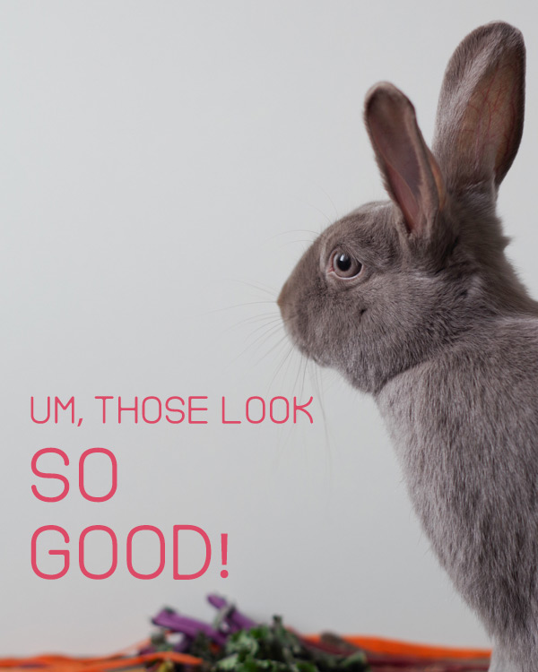 bunny-rabbit-checks-out-the-goods