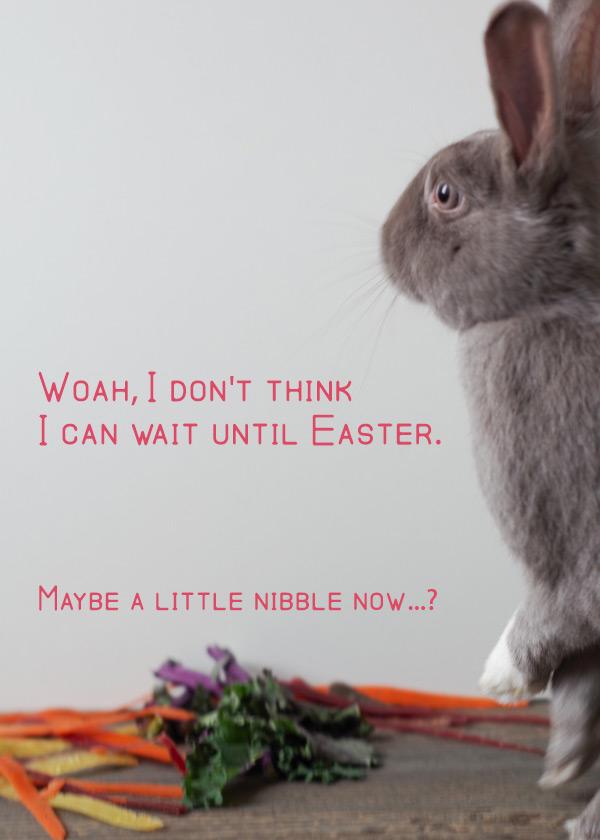 bunny-rabbit-likes-vegan-food