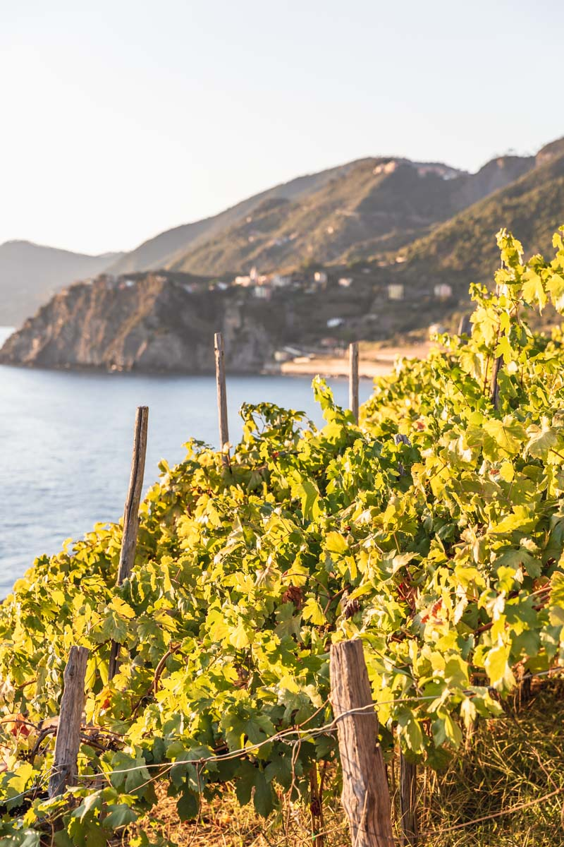 Vineyards above Manarola, Cinque Terre, Italy. Photo by Kari | Beautiful Ingredient.