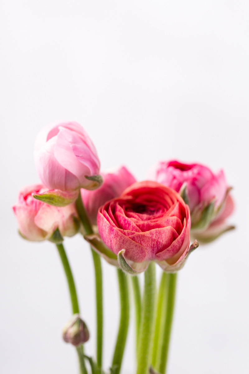simple-easter-ranunculus-bouquet.jpg