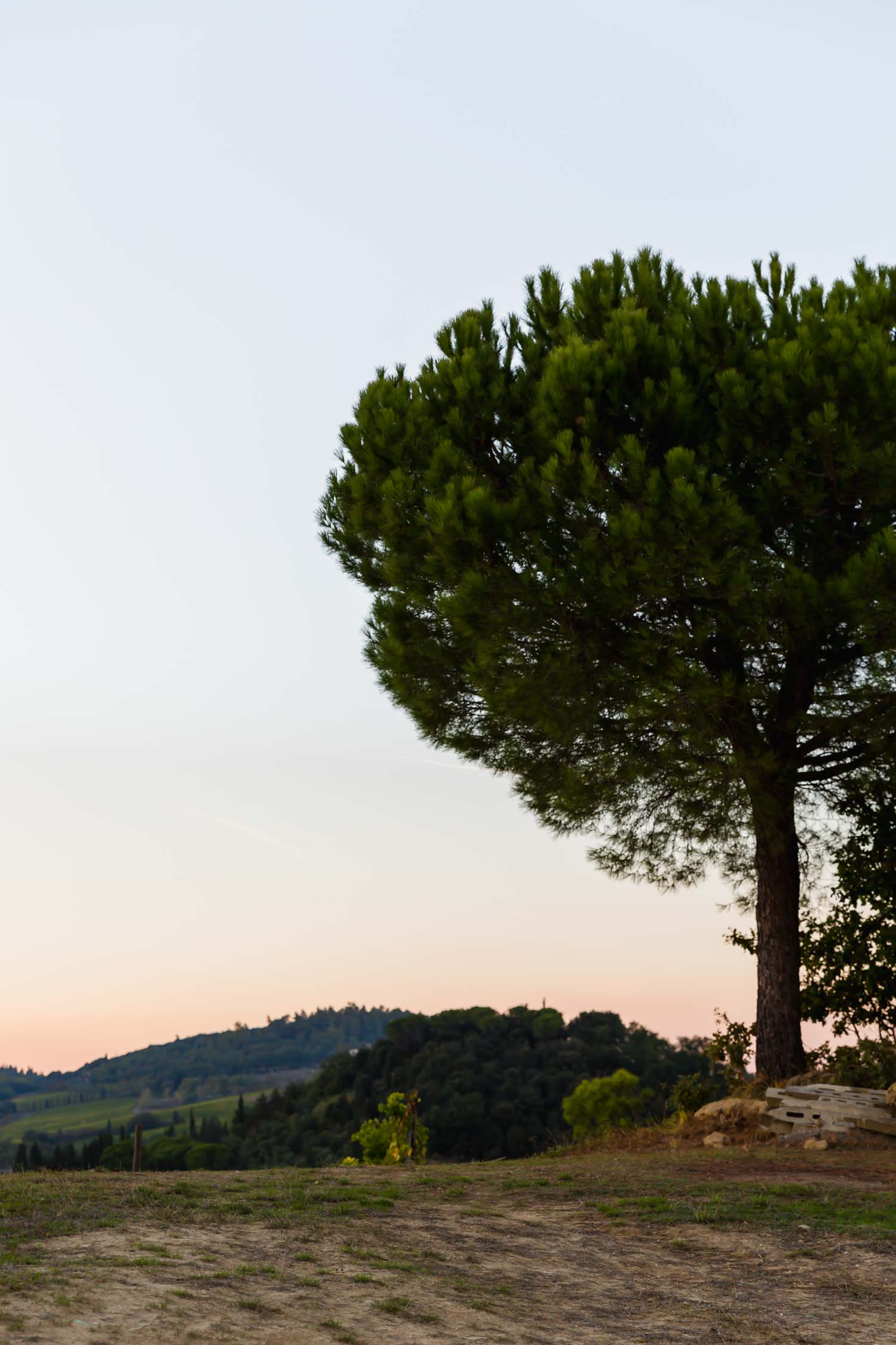 The pine tree at i pini, an organic vegan Italian farmhouse in Tuscany - where i pini got its name. #tuscany #travel #italy #italianfarmhouse #olivegroves #oliveoil #vineyards #italyinautumn #veganrestaurant #vegantravel #italytravel #veganitaly #vegantuscany #veganhotel #ecotourism #organichotel #veganhotel #veganretreat #veganbedandbreakfast #sangimignano