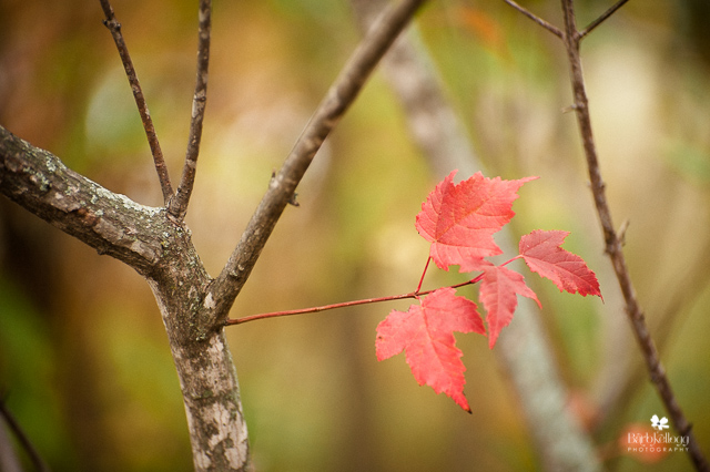 red leaf on tree in fall