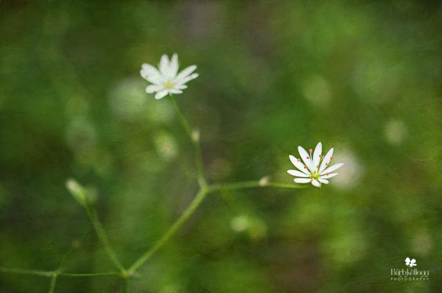 NEW  la petite fleur...