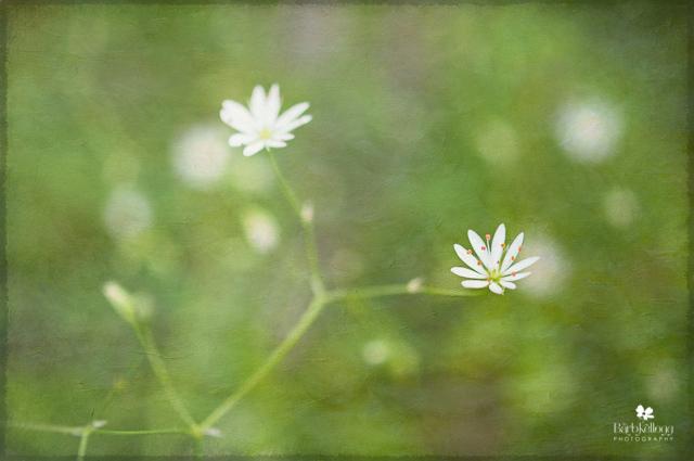 """Old"" la petite fleur..."