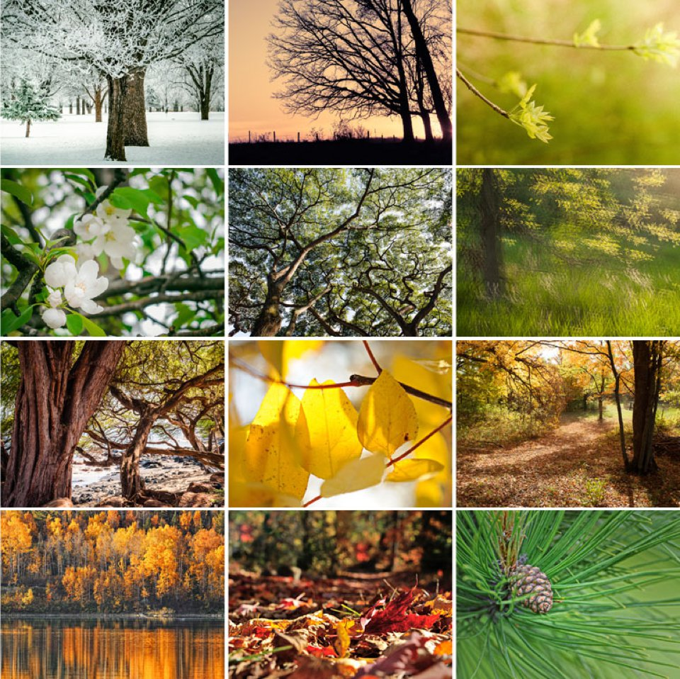 The 12 tree photographs in the 2015 Calendar