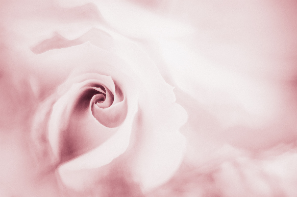 A Rose by Any Other Name  by Barb Kellogg
