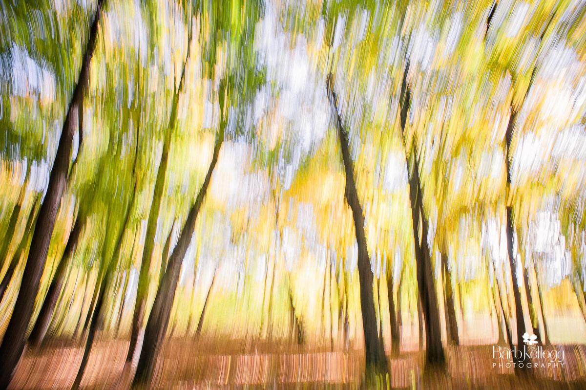 Woods of Avon