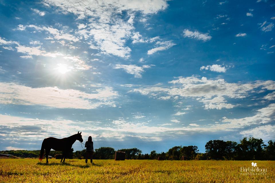 horse-field-barb-kellogg.jpg