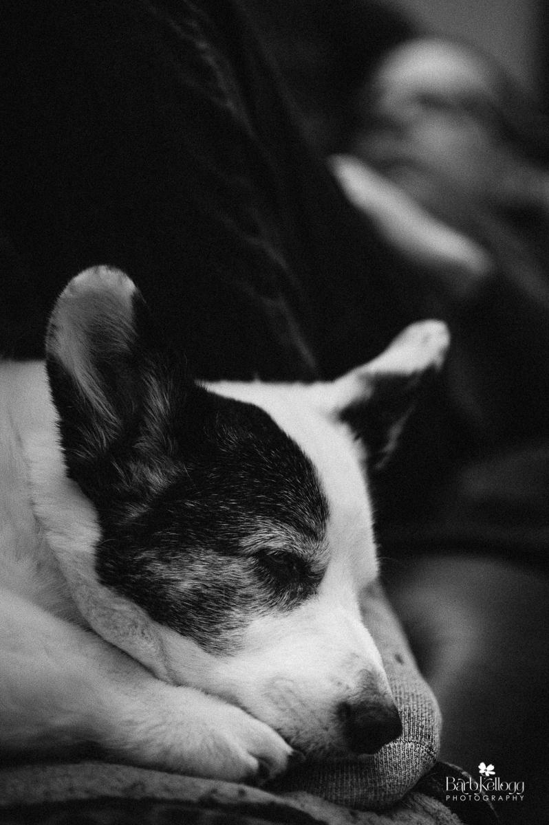 My dog Mulder