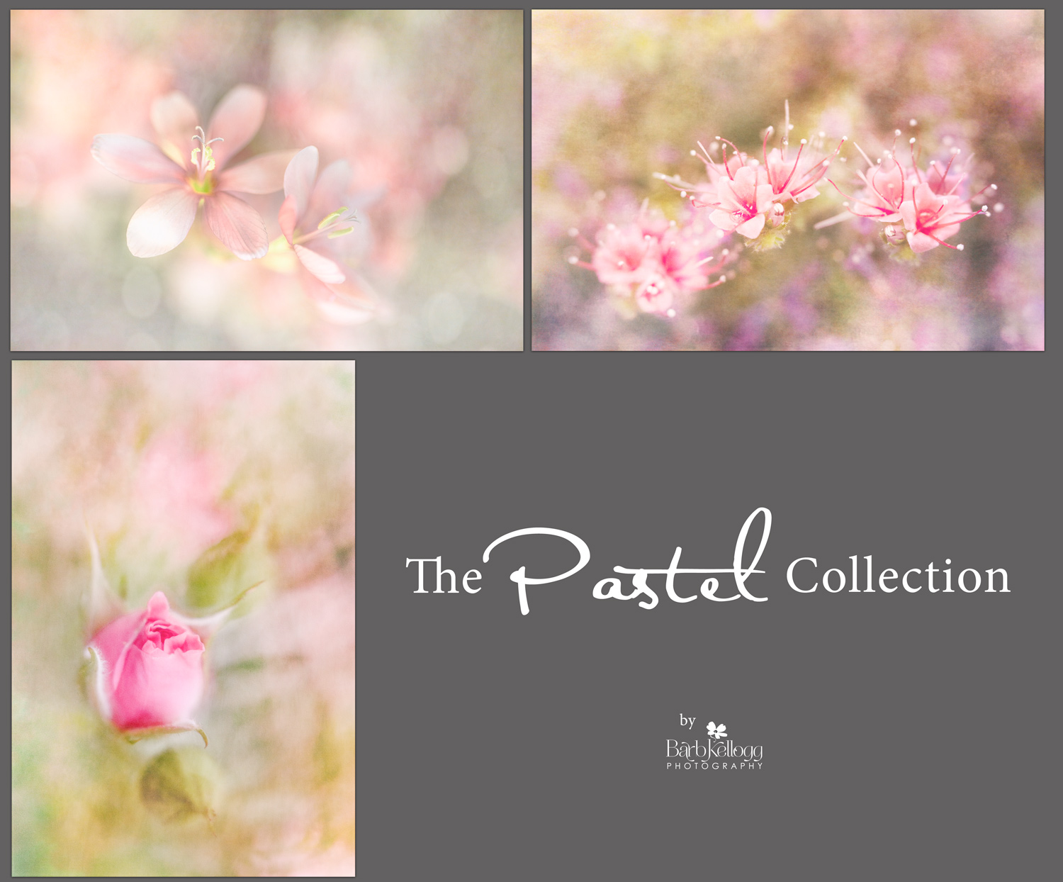 Pastel_Collection_1500px.jpg