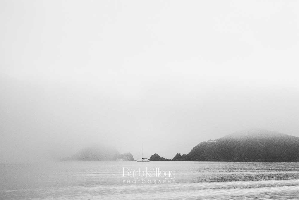 Into the Morning Mist , by Barb Kellogg (New Zealand). Click photo to shop prints and gallery wraps.