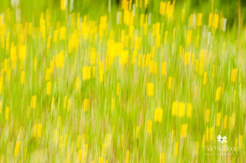 130624_dsc_7605_flowers_lr.jpg