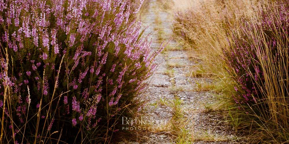 Path Through the Heather