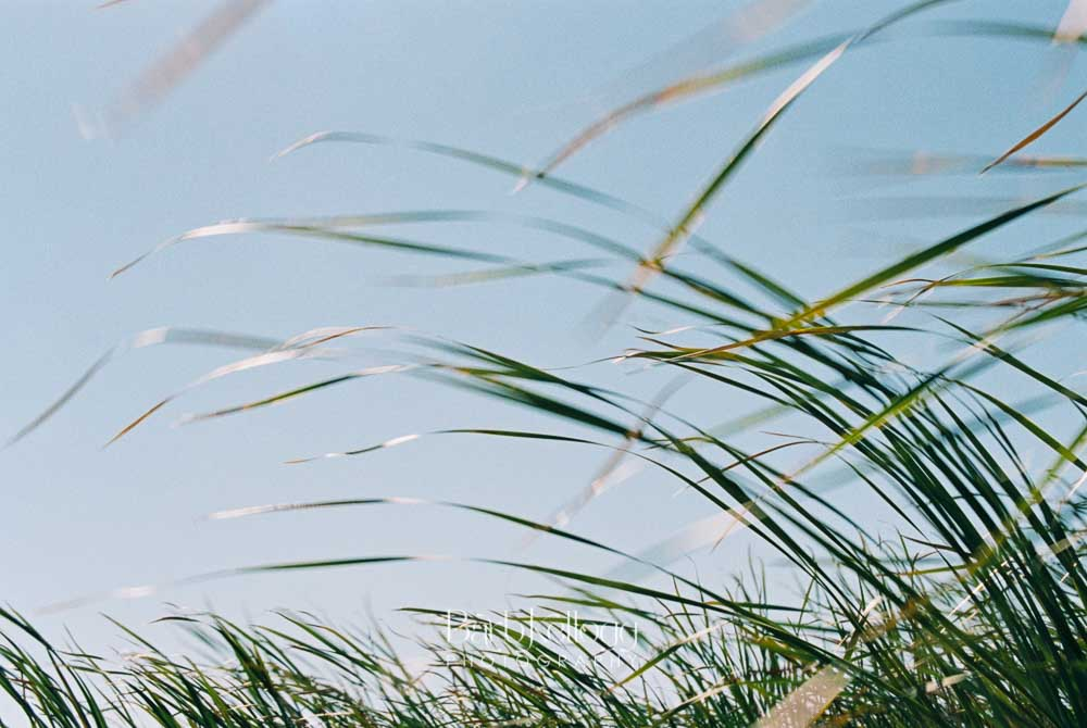 Whispering Wind , 35mm film photography by Barb Kellogg