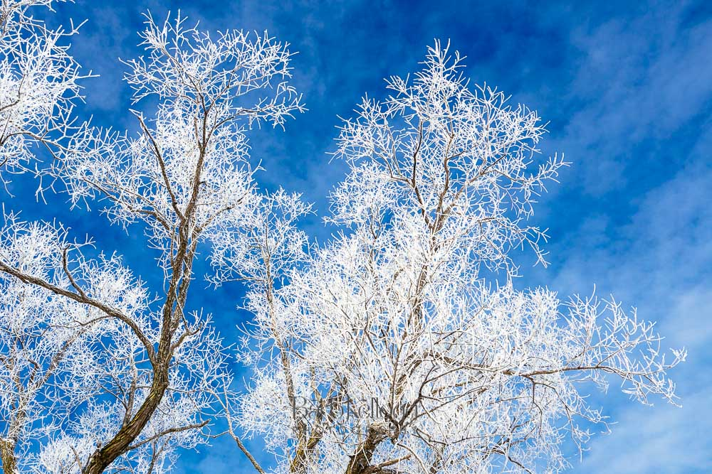 Blue Sky Winter Frost , by photographer Barb Kellogg