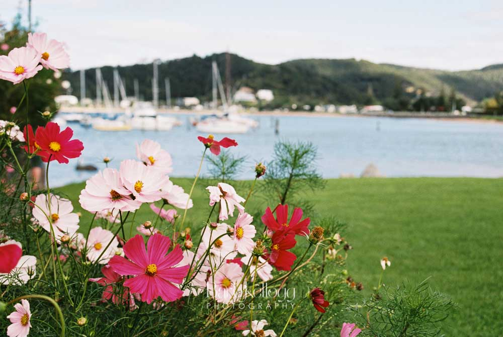 Cosmos - Bay of Islands, New Zealand.