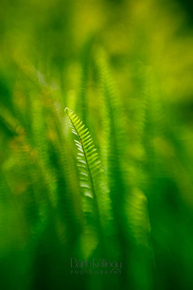 Green Fern,  capturing all the delicate shades of green to cool and calm you.