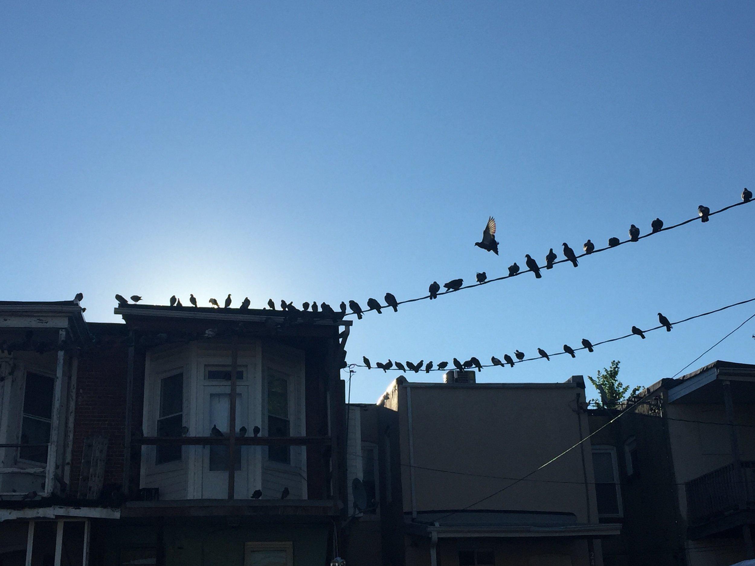 Photo: Early Bird | Mateo Blu