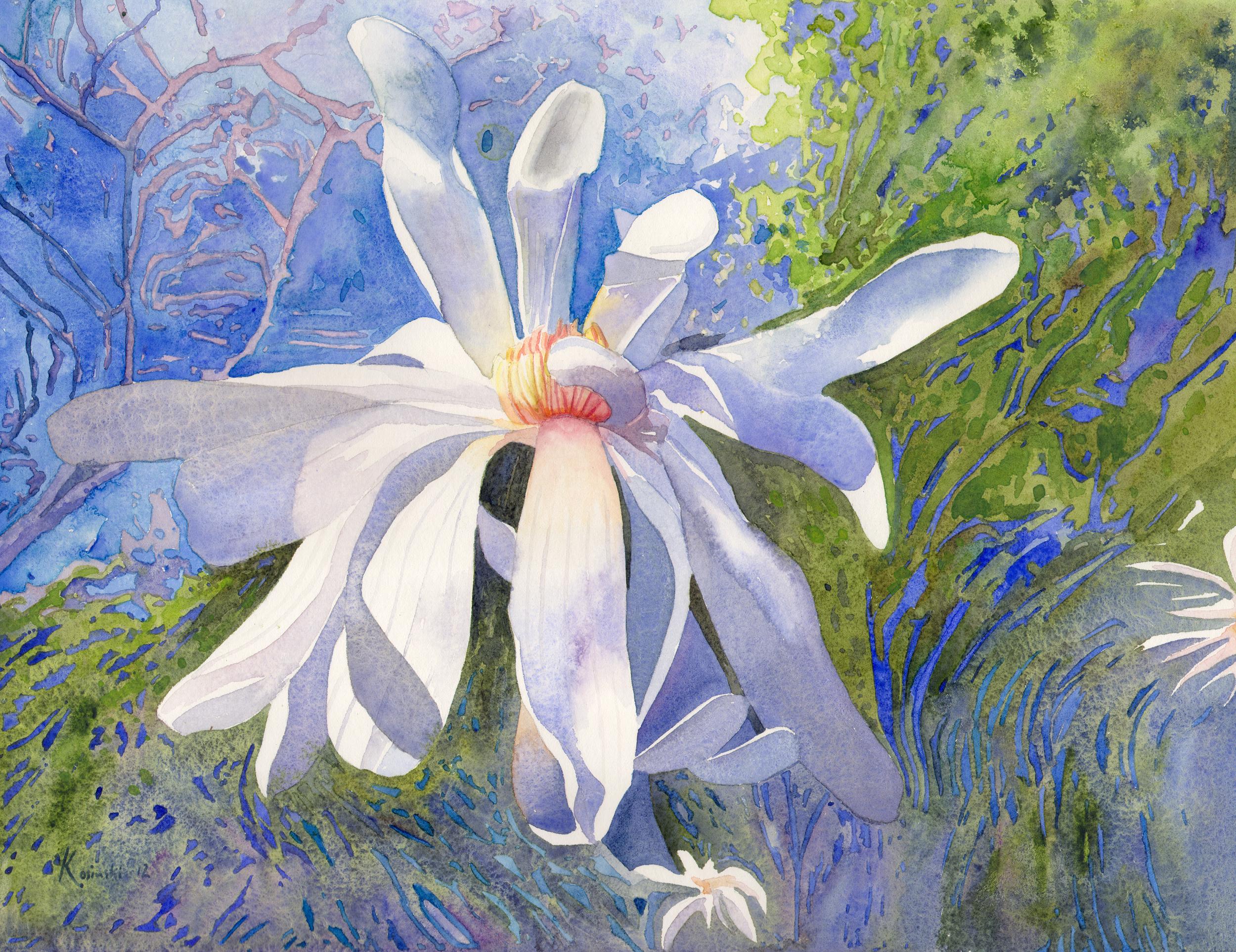 Star Magnolia, Brookgreen Gardens, SC