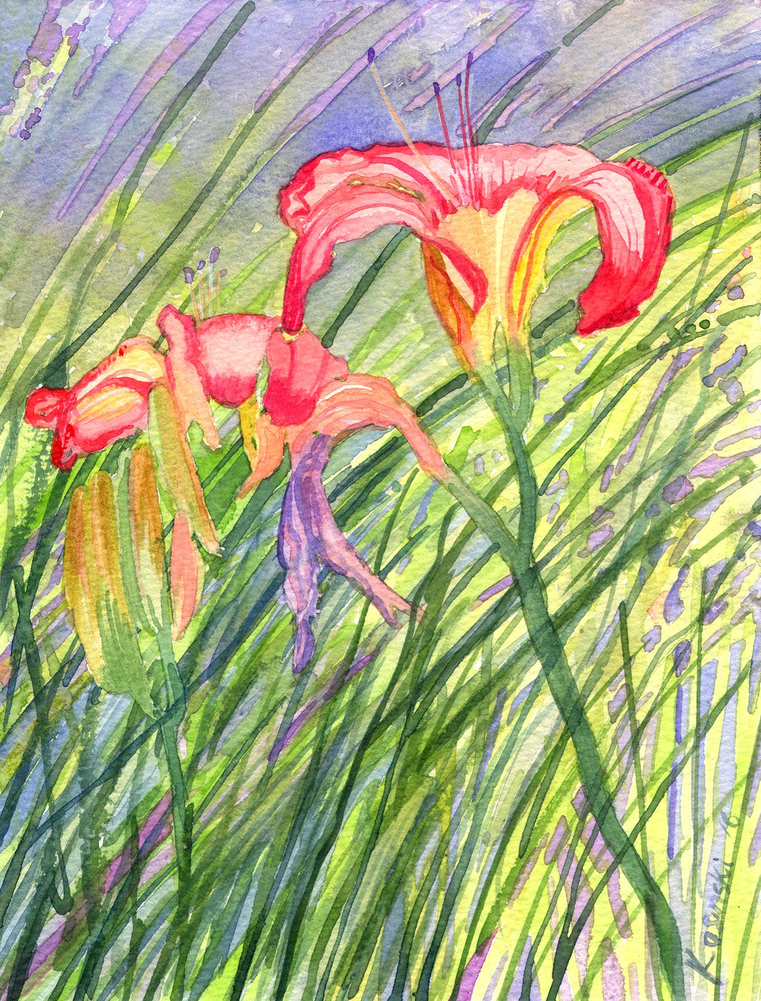 Daylilies in my Garden