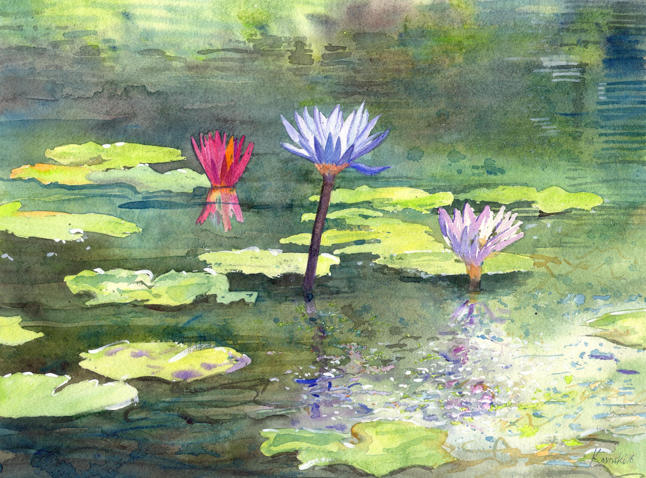 Water Lilies, Brookgreen Gardens, SC