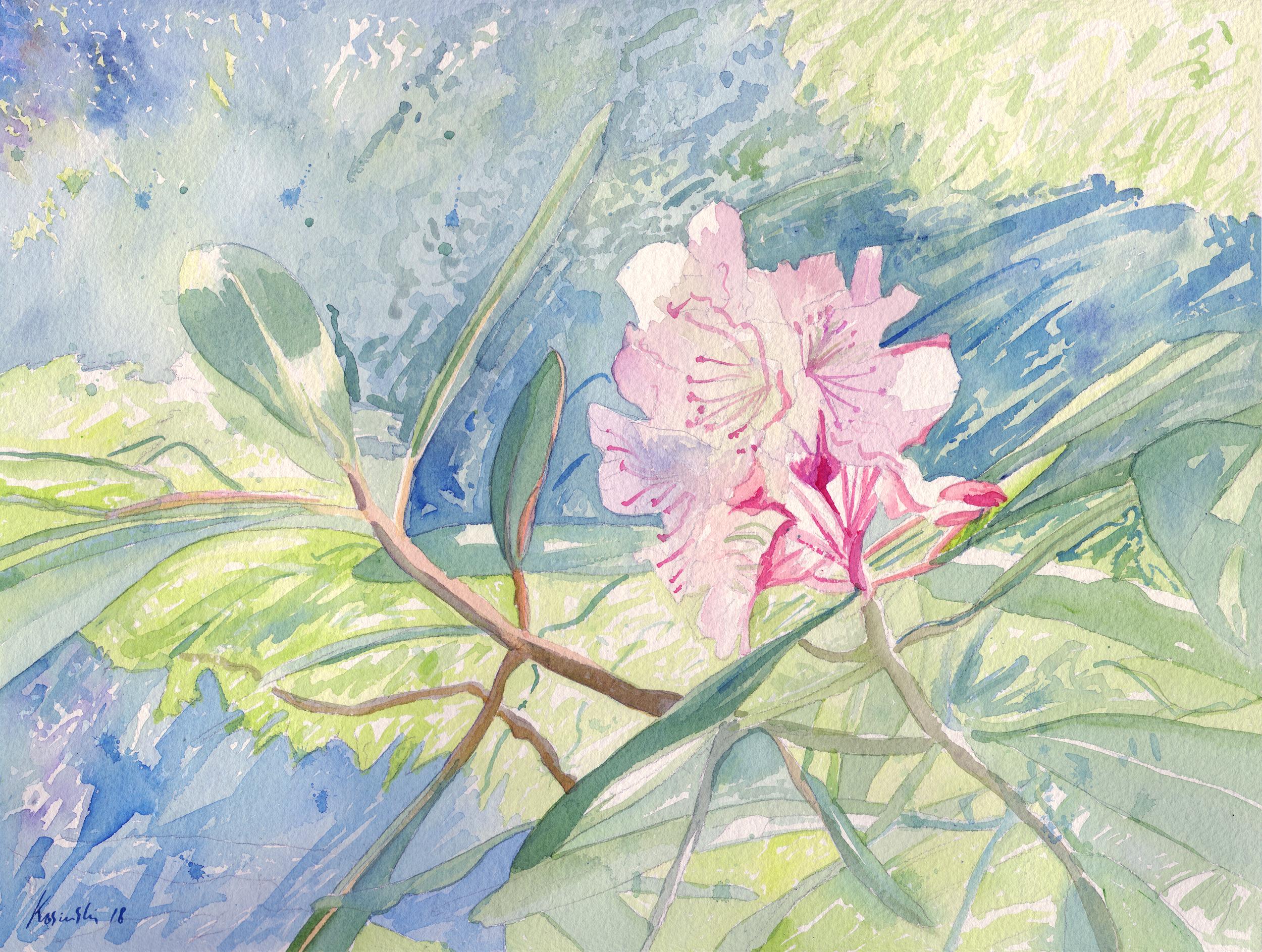 Wild Rhododenron