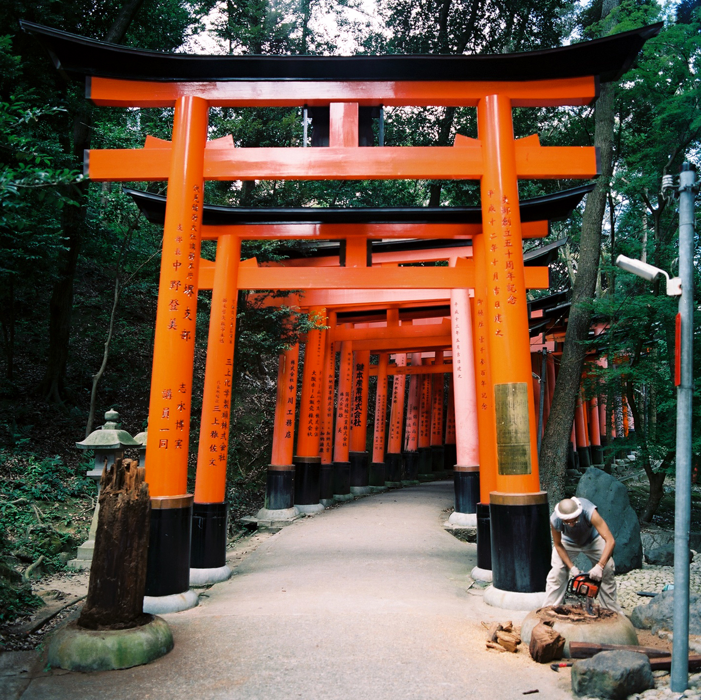 New Torii, Fushimi Inari Taisha, Fushimi-ku, Kyoto, Japan, 2012