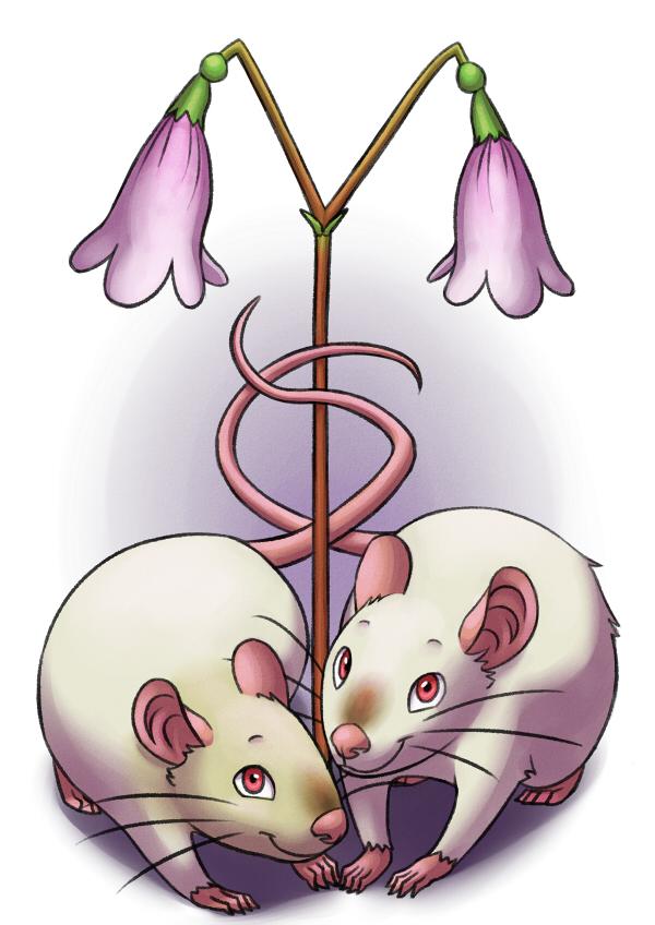 Twin Siamese Rats