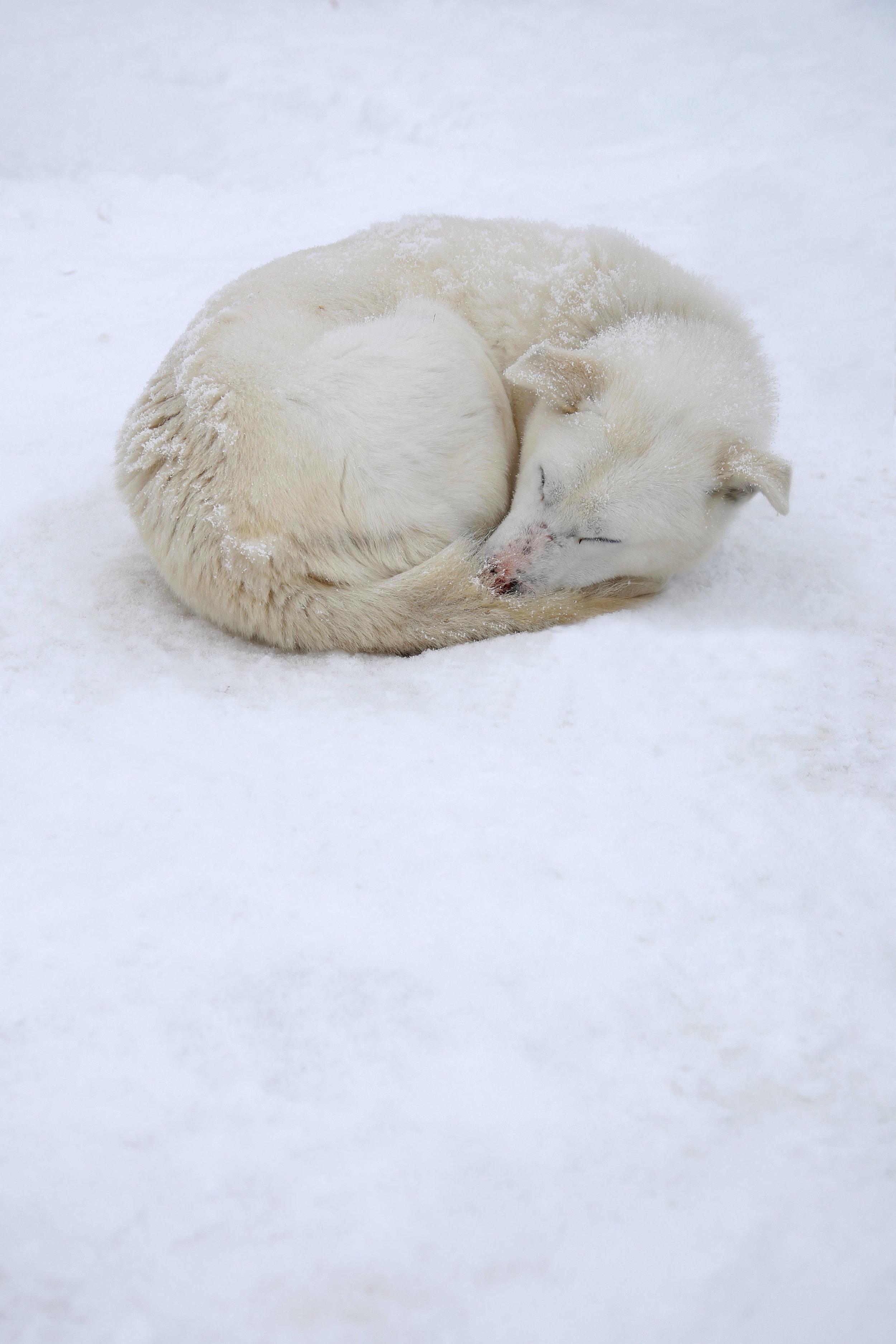 asleeppuppa.jpg