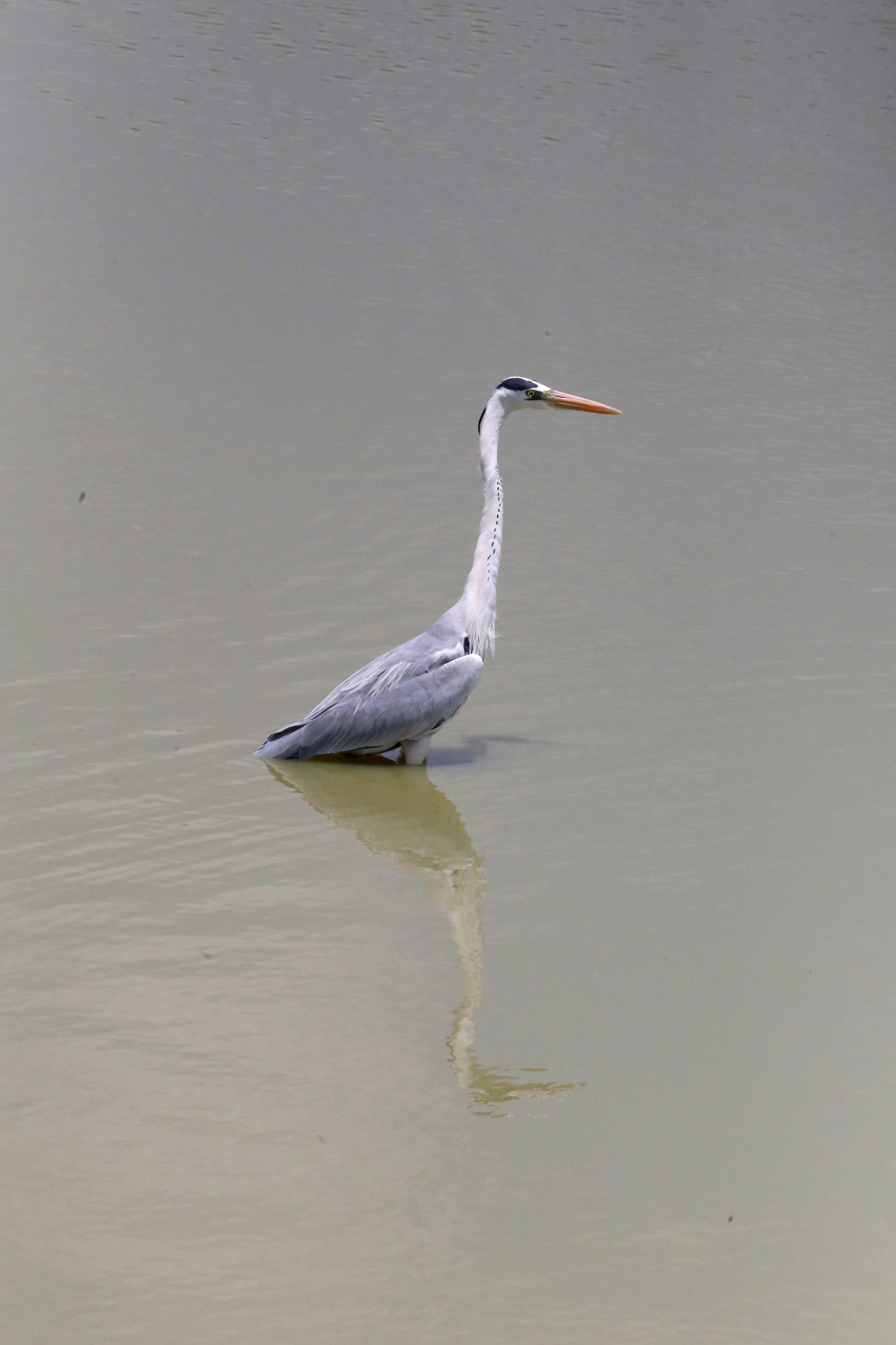 birdwater.jpg
