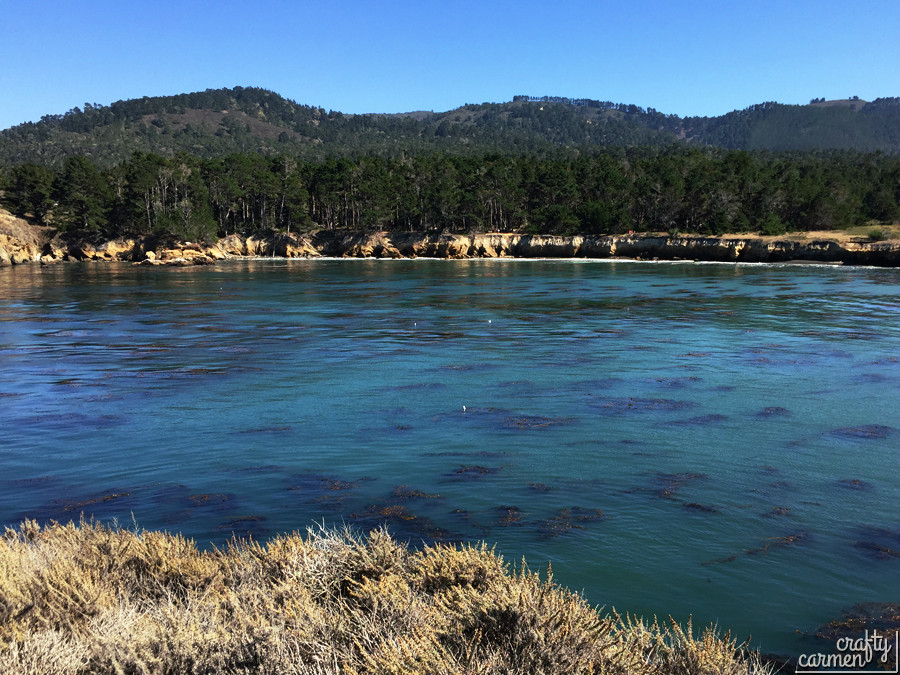 Point Lobos, Carmel, CA | craftycarmen