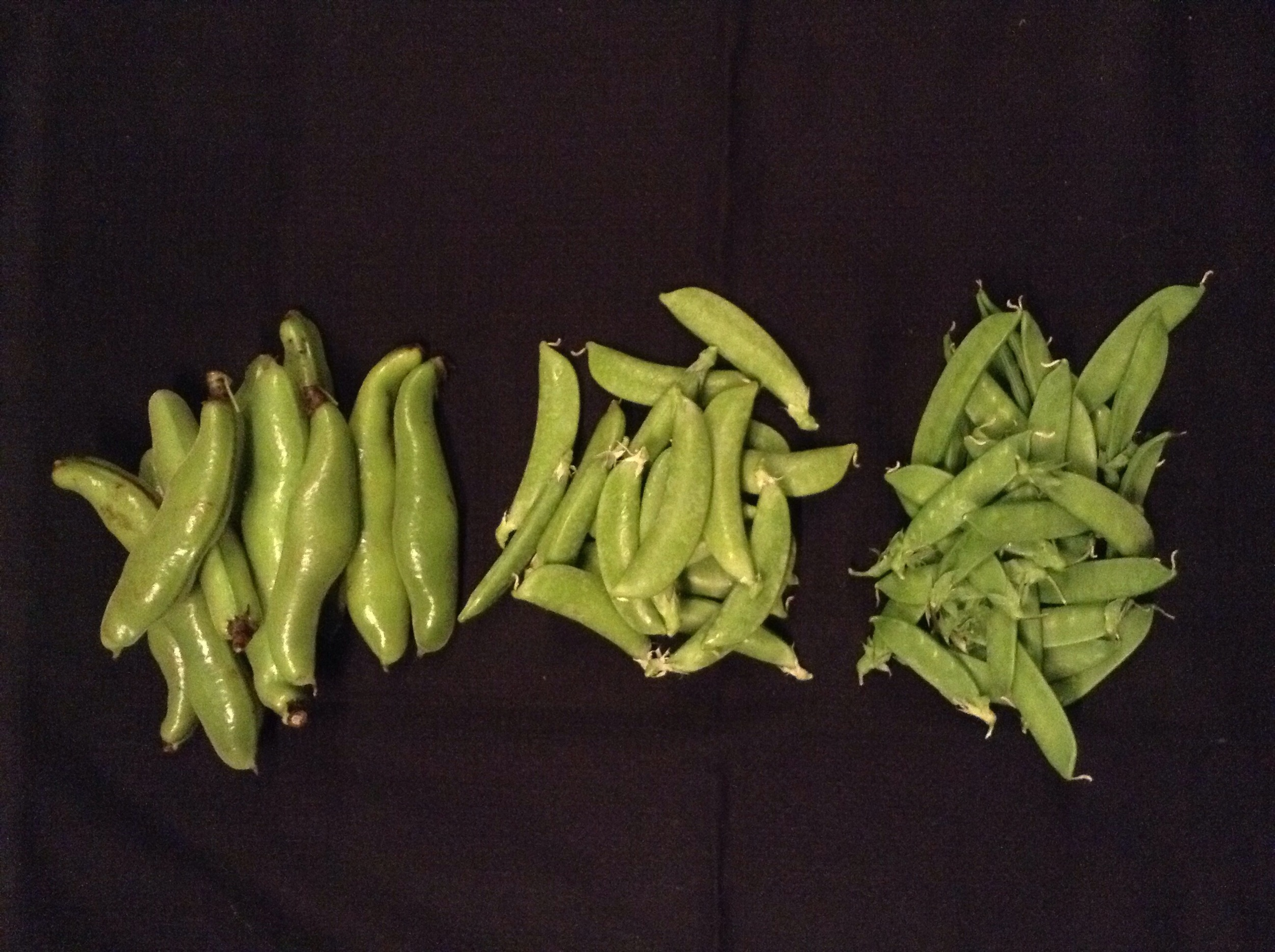 Horse beans and two kinds of snap peas