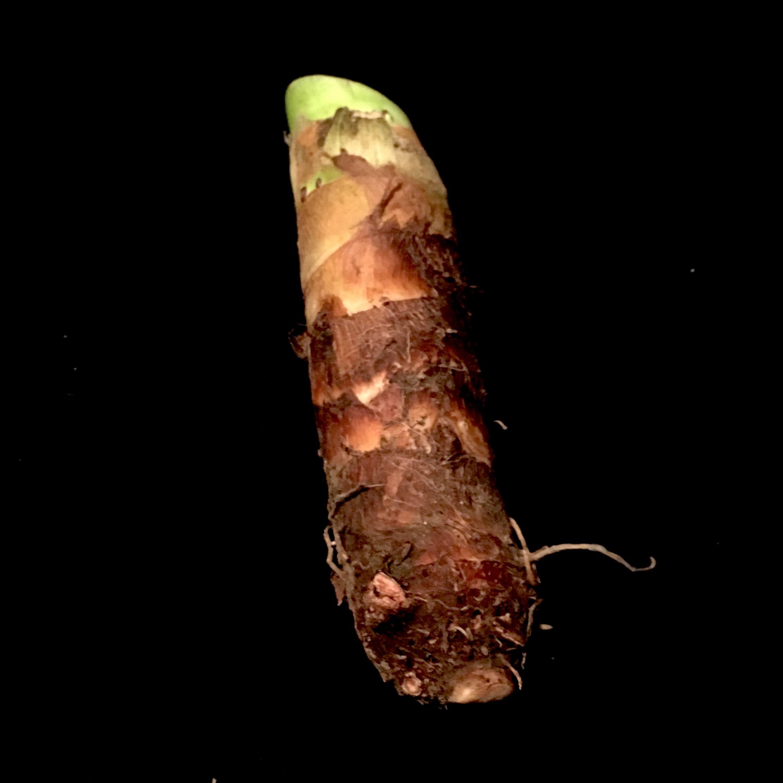 Takenoko imo - たけのこ芋