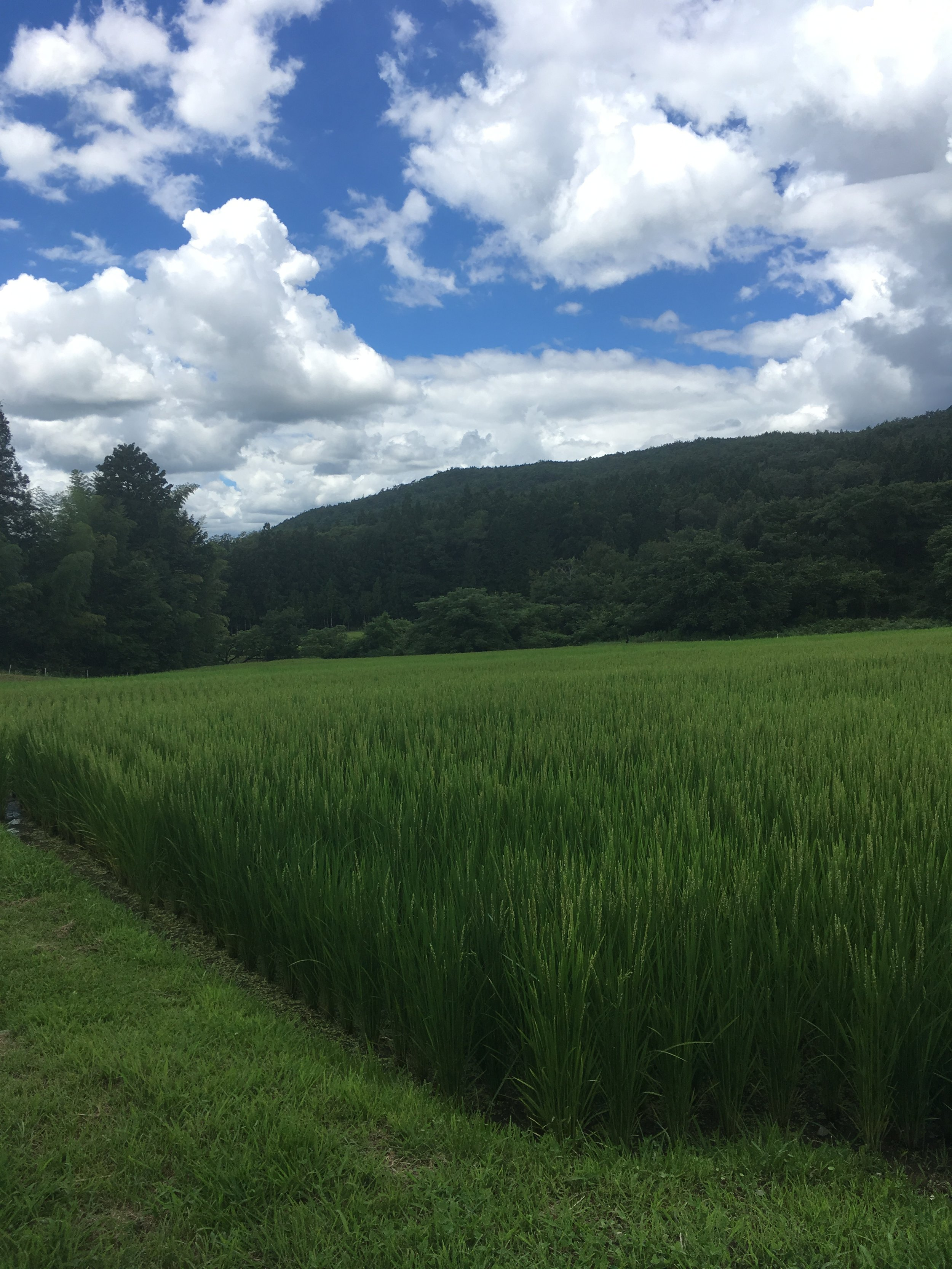 Terraced rice fields along the hike to Magome