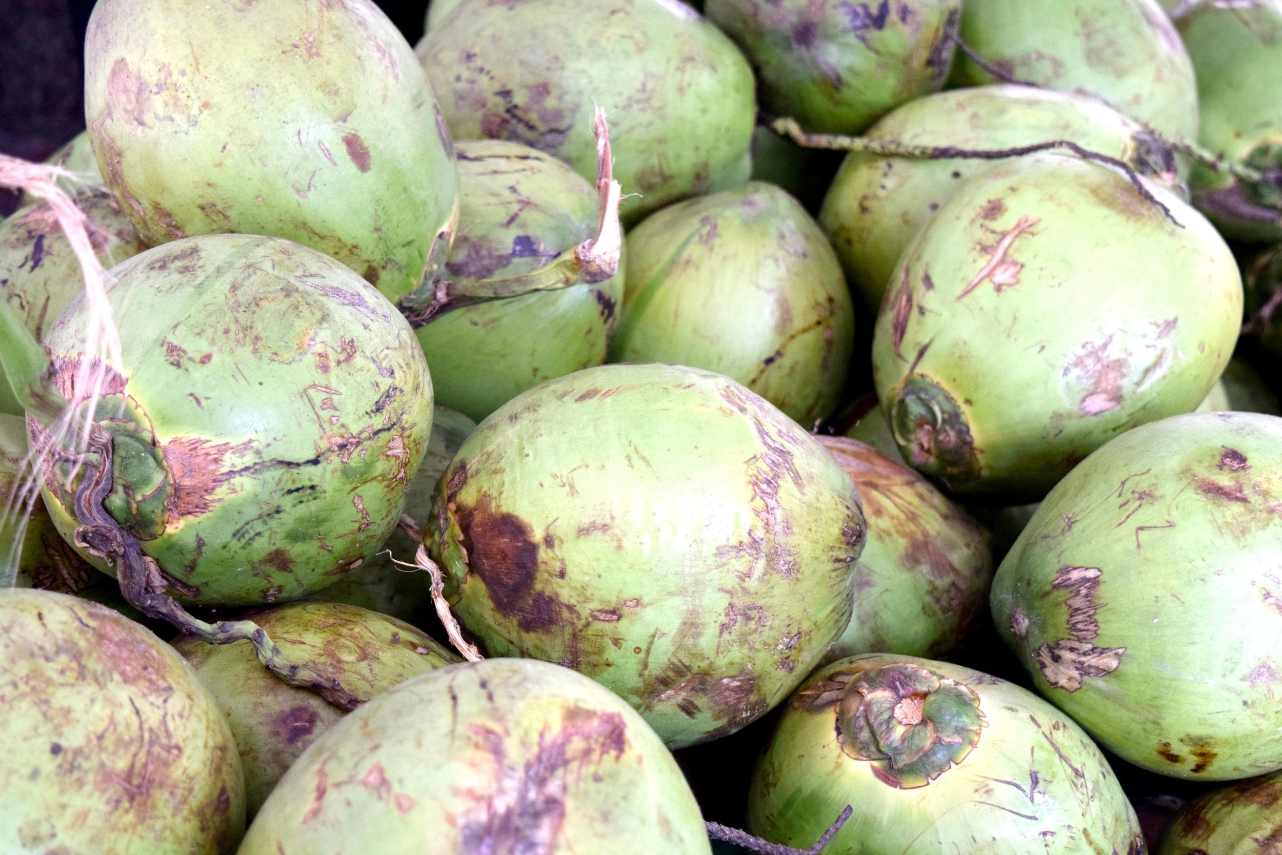 Rio-de-Janiero-Fresh-Coconut-Water-Fitness-Blogger