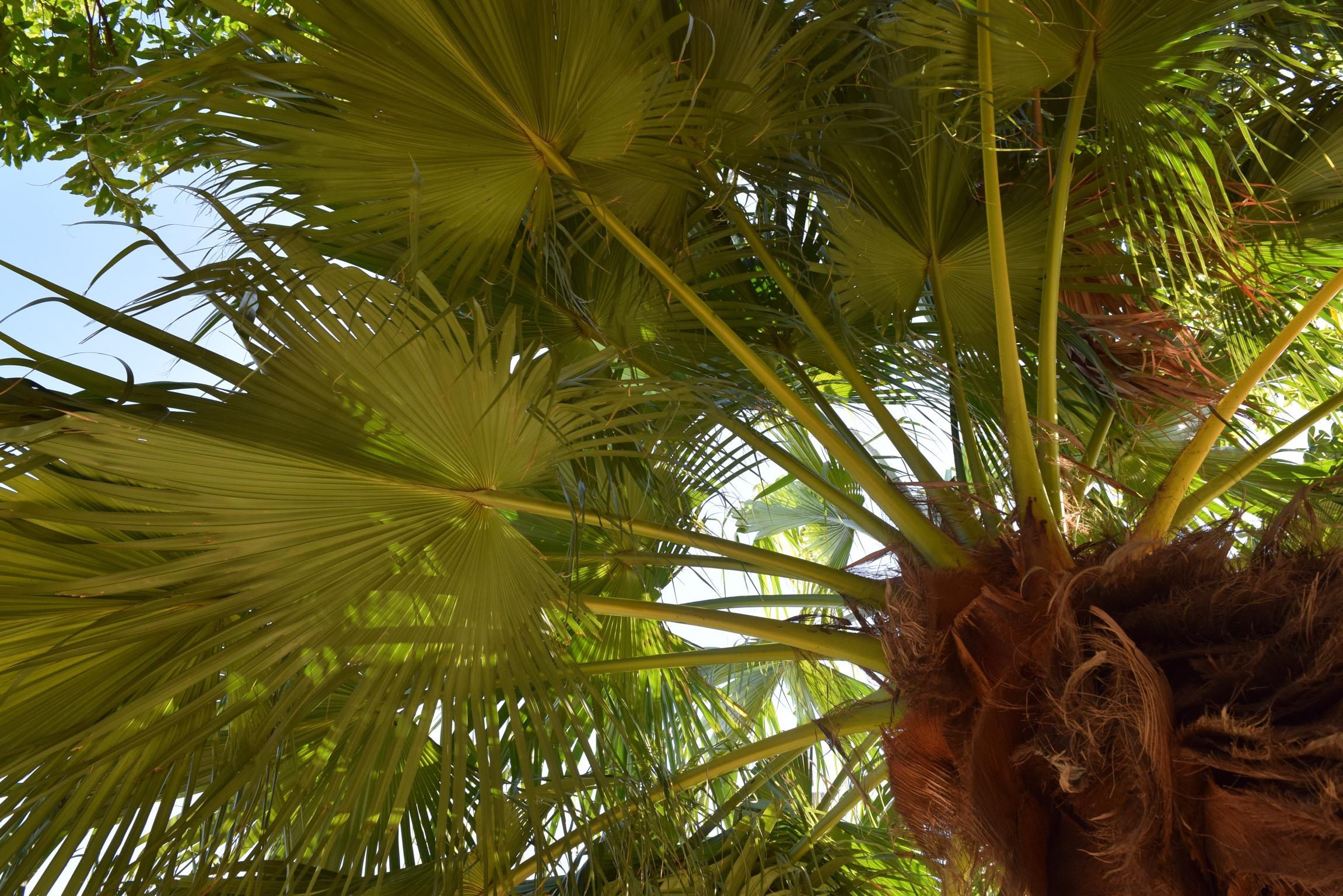 Palm-Tree-Beach-Hike-Fitness-Blogger-Brazil