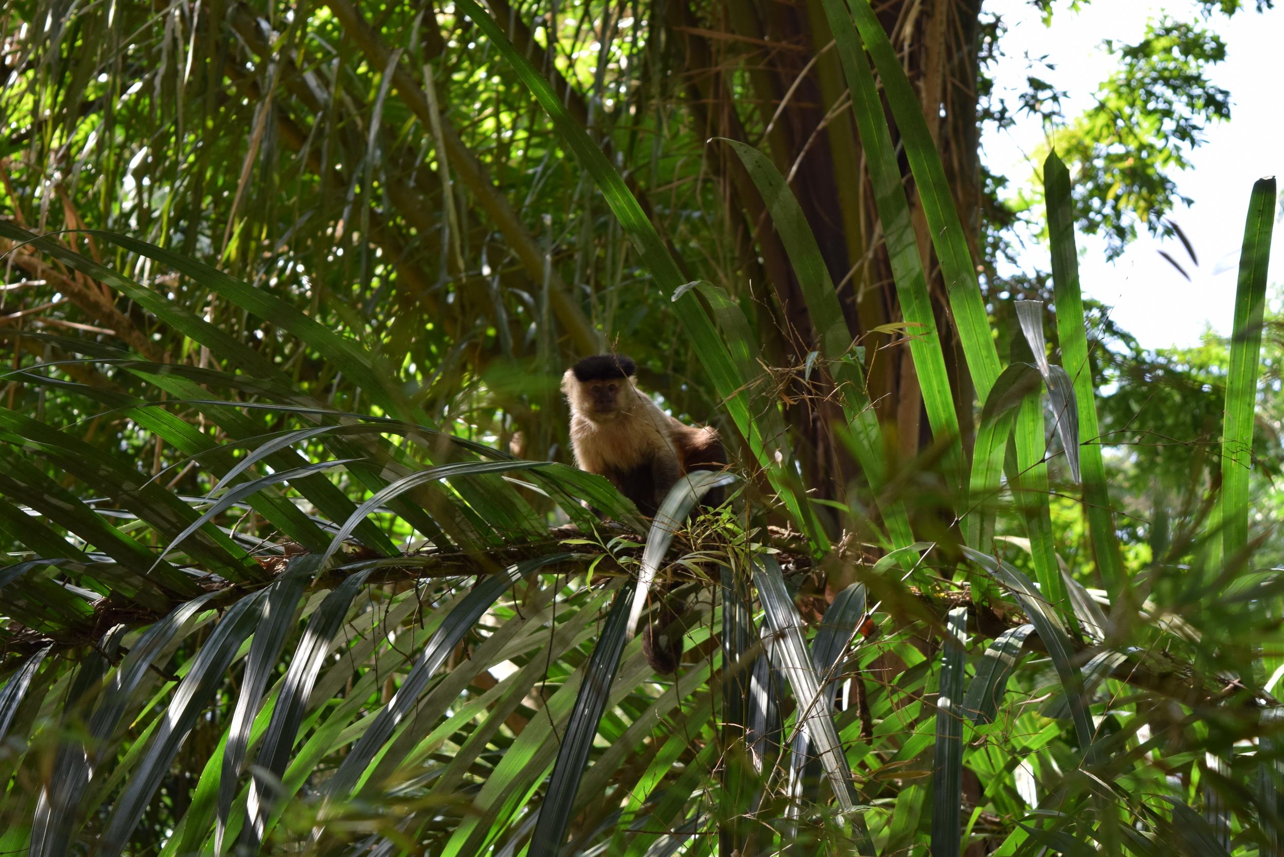 Rio-Parque-Lage-Corcovado-Hike-Fitness-Blogger-Monkey