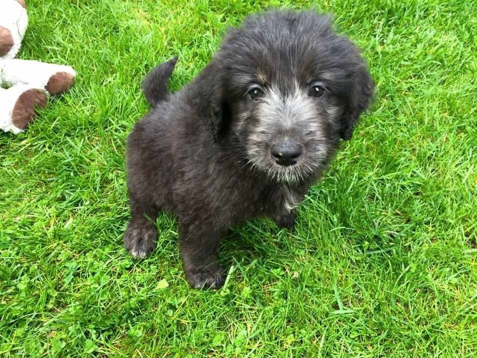 julia puppy.JPG