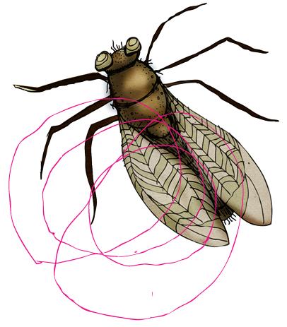 fly-lumbs.png