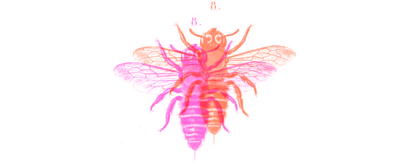 bee02.png