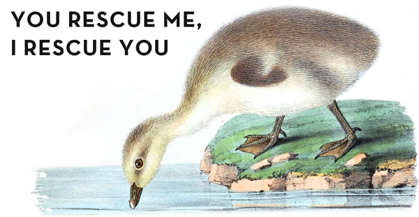 Animal---Bird---Duck,-egg-and-duckling-1nnn.png