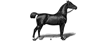 horse11.png