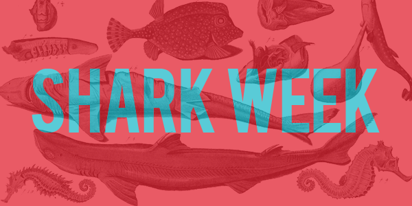 sharkweek-header.png