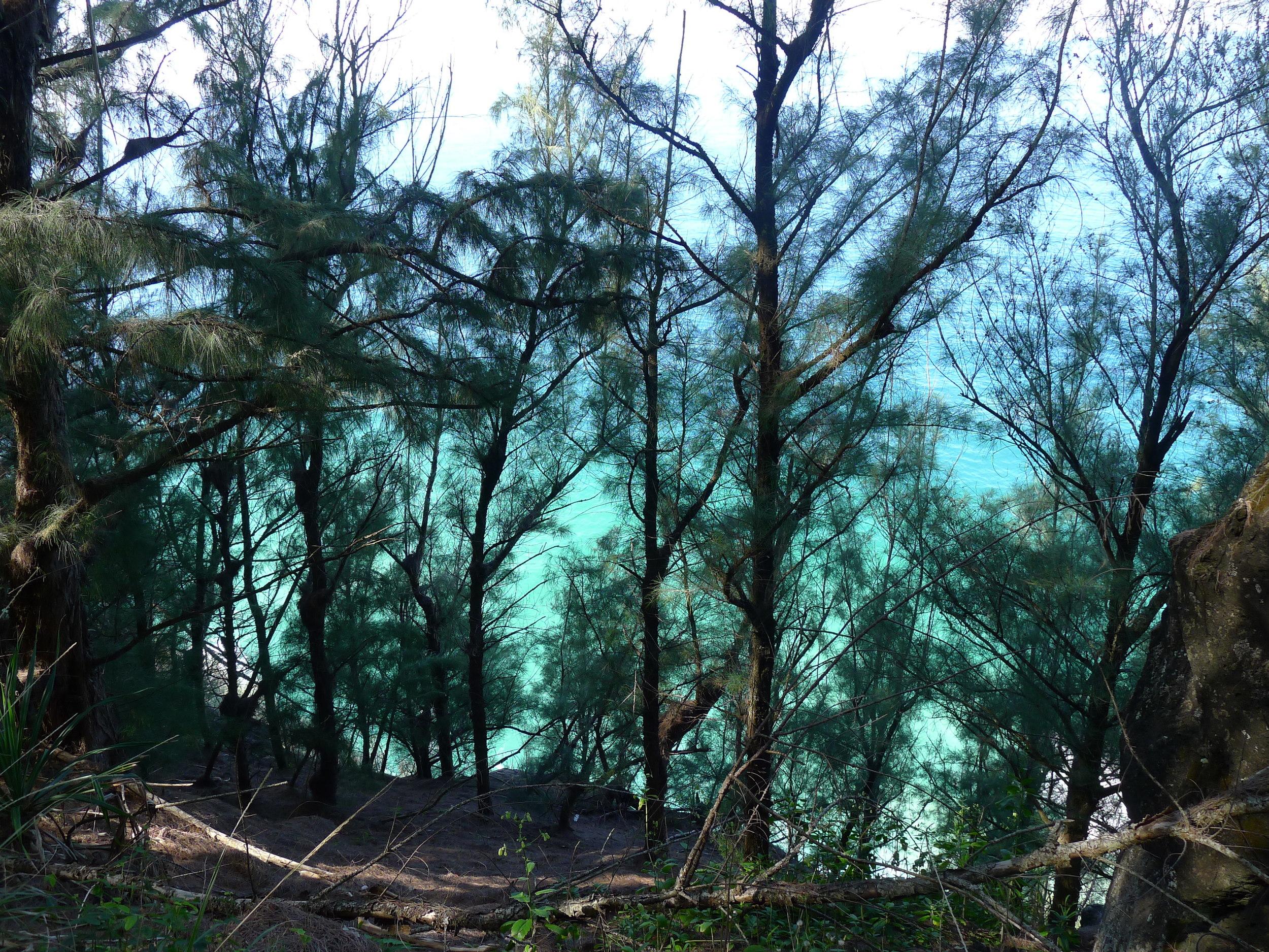 Kuva eräältä patikointiretkeltä Viivin kanssaKauai -saarelta.