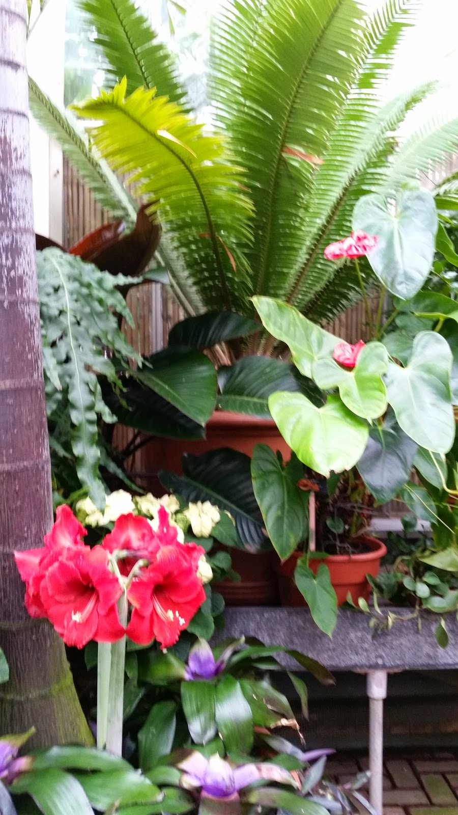 Tropical Plants 4.jpg