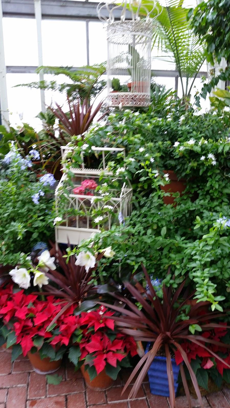Tropical Plants 3.jpg