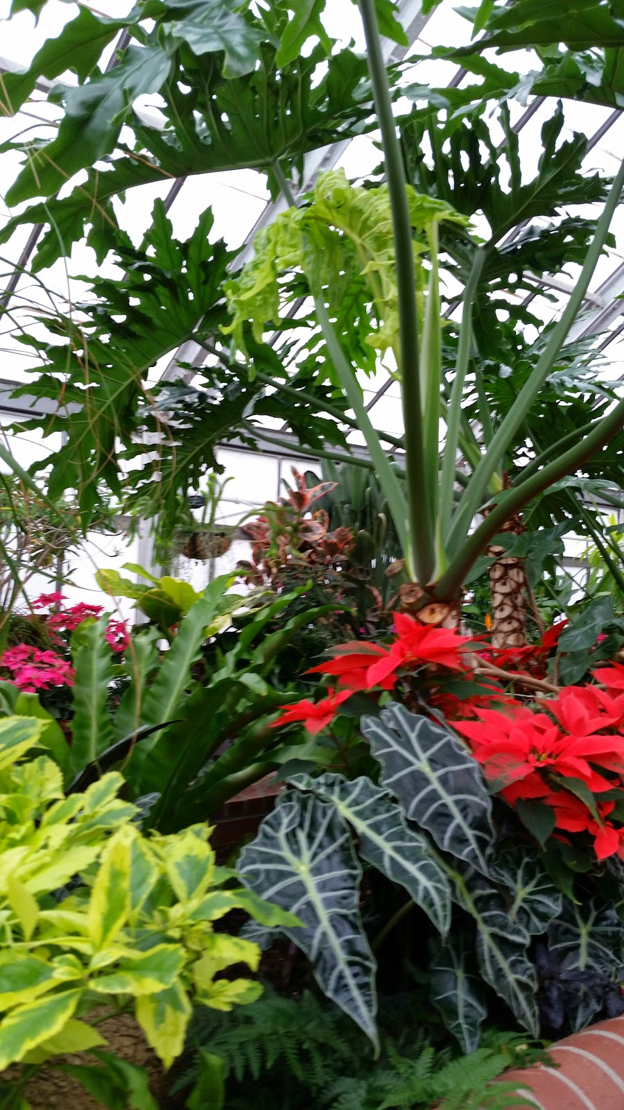Tropical Plants 5.jpg