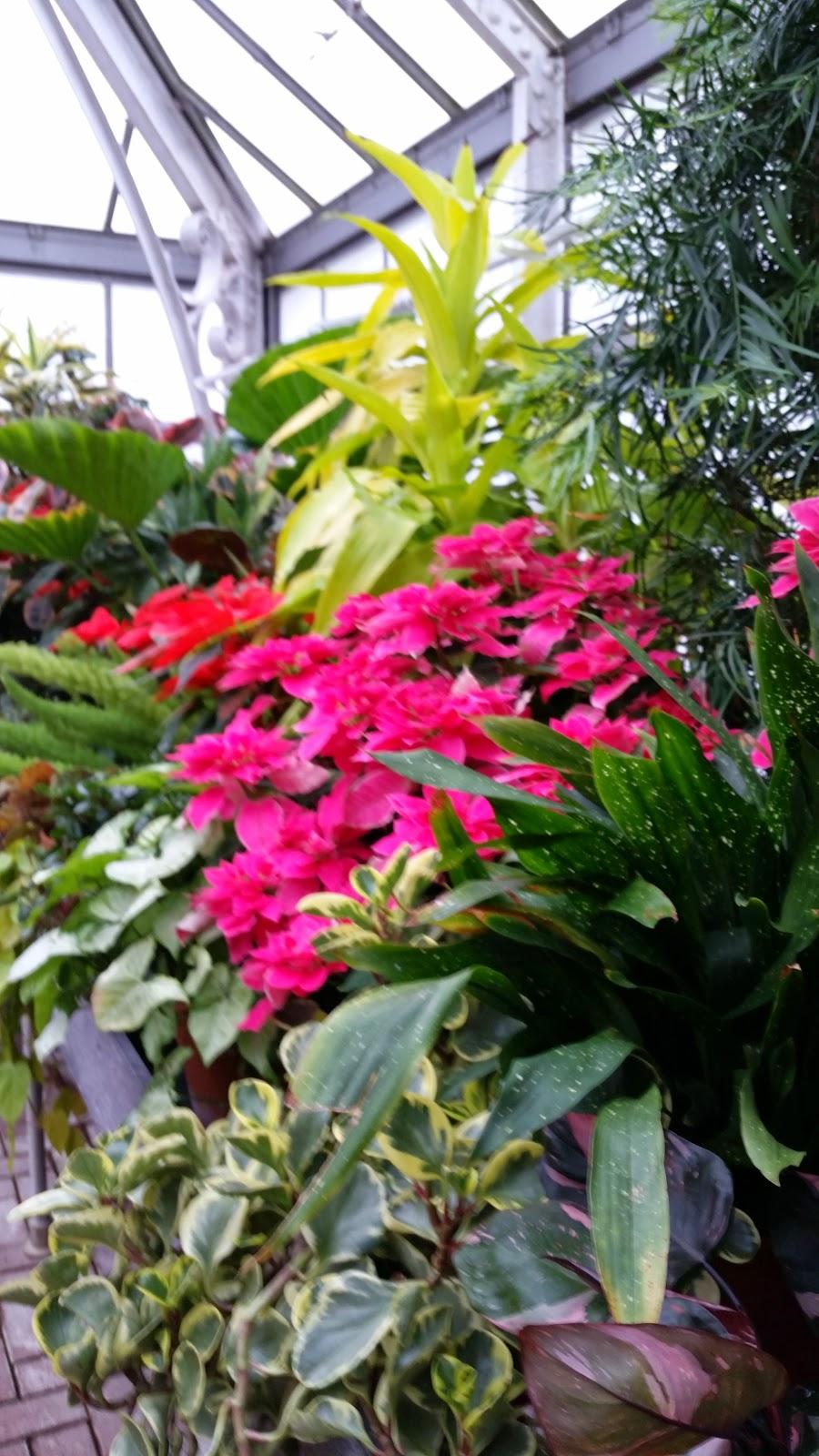 Tropical Plants 8.jpg